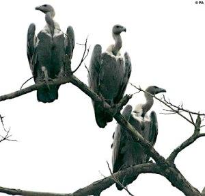juke8-vultures